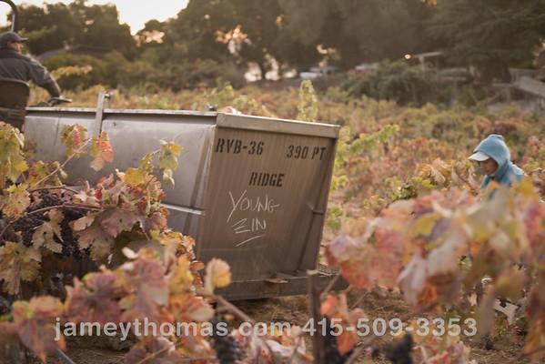 90930_Ridge_Harvest_040