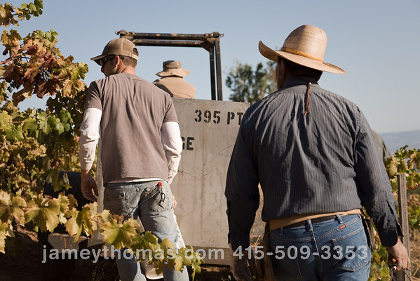 90930_Ridge_Harvest_249