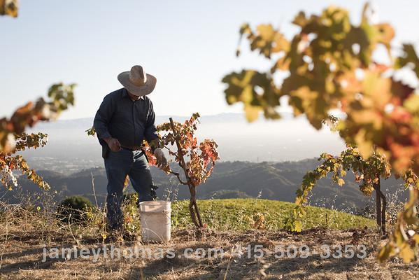 90930_Ridge_Harvest_189