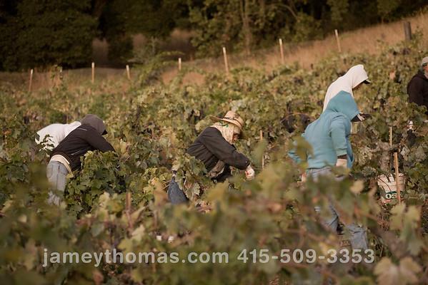 90930_Ridge_Harvest_032