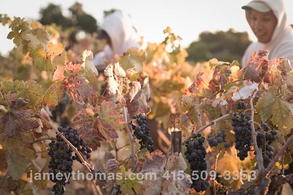 90930_Ridge_Harvest_097