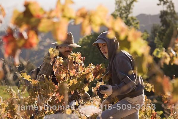 90930_Ridge_Harvest_235