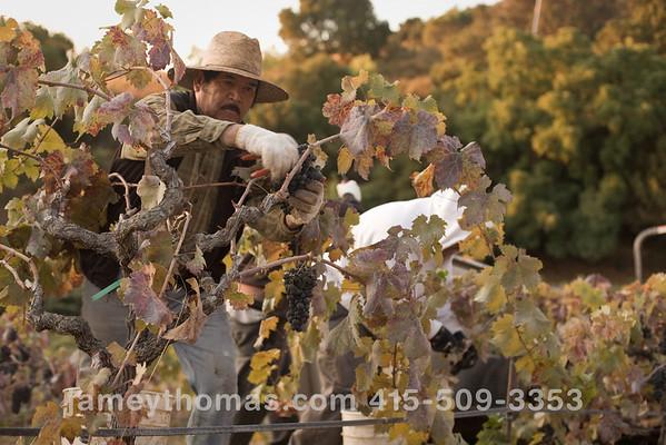 90930_Ridge_Harvest_091