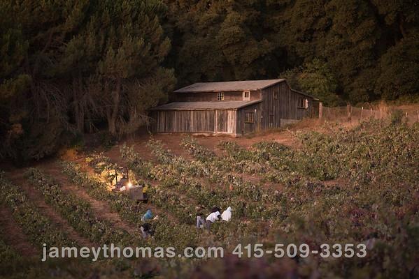 90930_Ridge_Harvest_005