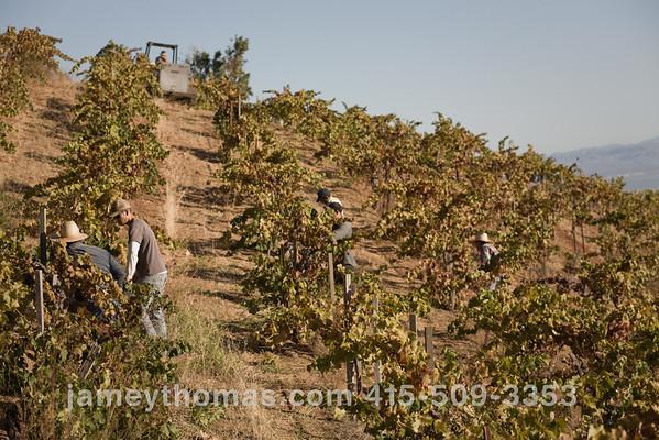 90930_Ridge_Harvest_246