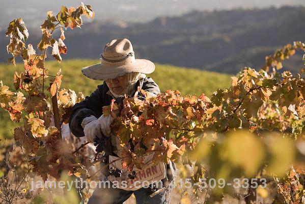 90930_Ridge_Harvest_228