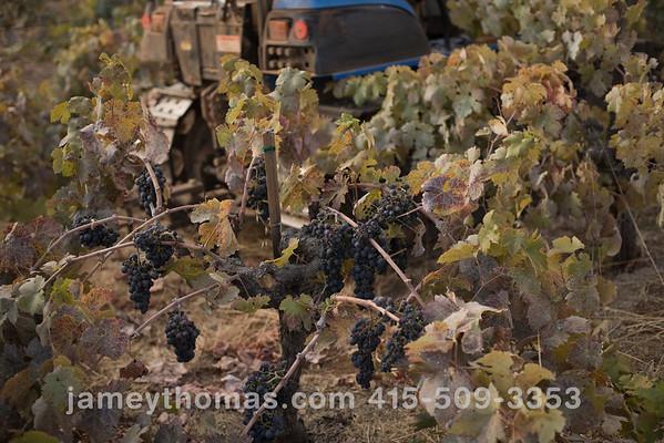90930_Ridge_Harvest_095