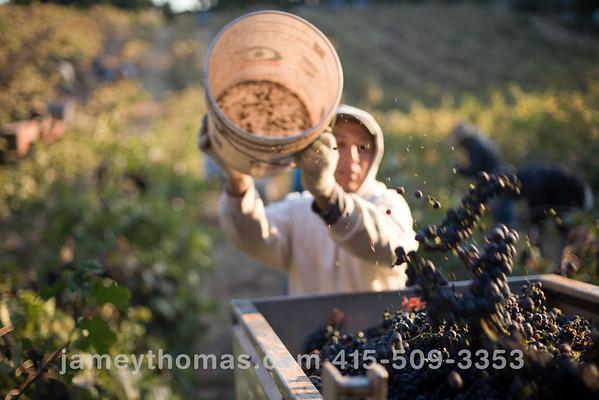 90930_Ridge_Harvest_137