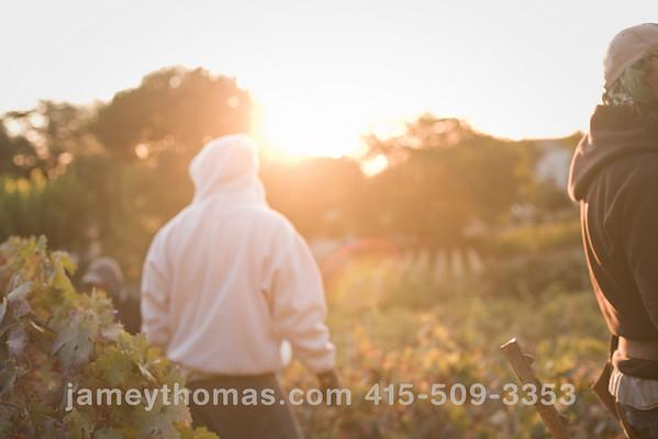 90930_Ridge_Harvest_109