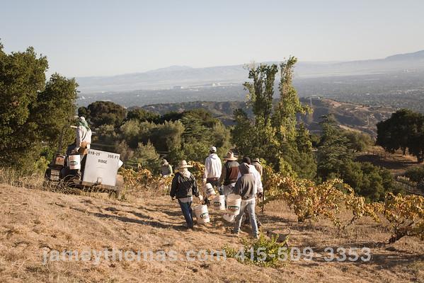 90930_Ridge_Harvest_200