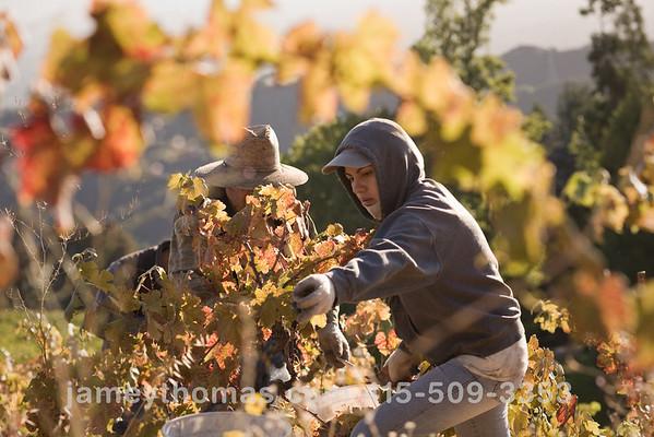 90930_Ridge_Harvest_236