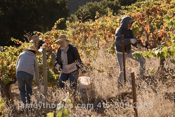 90930_Ridge_Harvest_247