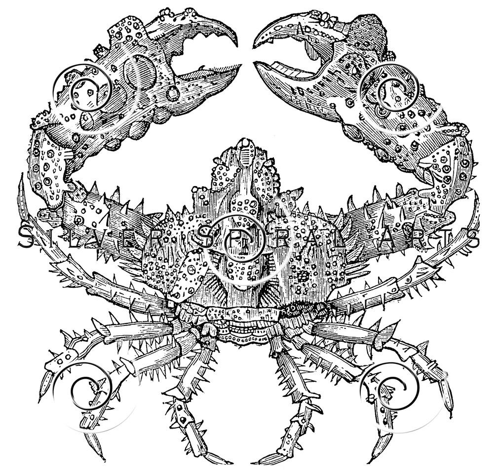 Vintage Sea Crab Illustration - 1800s Crabs Images