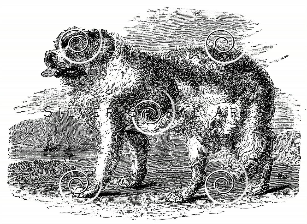 Vintage Newfoundland Dogs Illustration - 1800s Dog Images