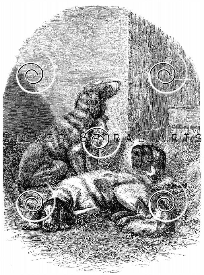 Vintage Spaniel Dogs Illustration - 1800s Dog Images