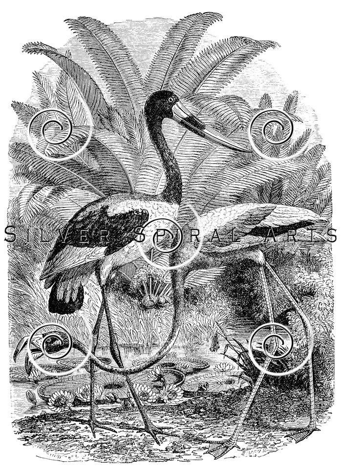 Vintage Flamingo Birds Illustration - 1800s Jabiru Bird Images