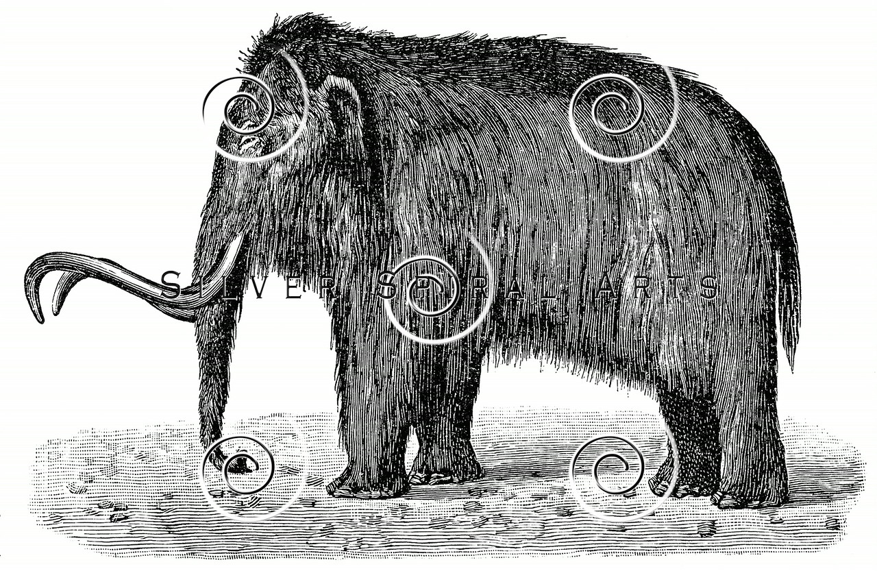 Vintage Woolly Mammoth Illustration - 1800s Mammoths Tusks Images.