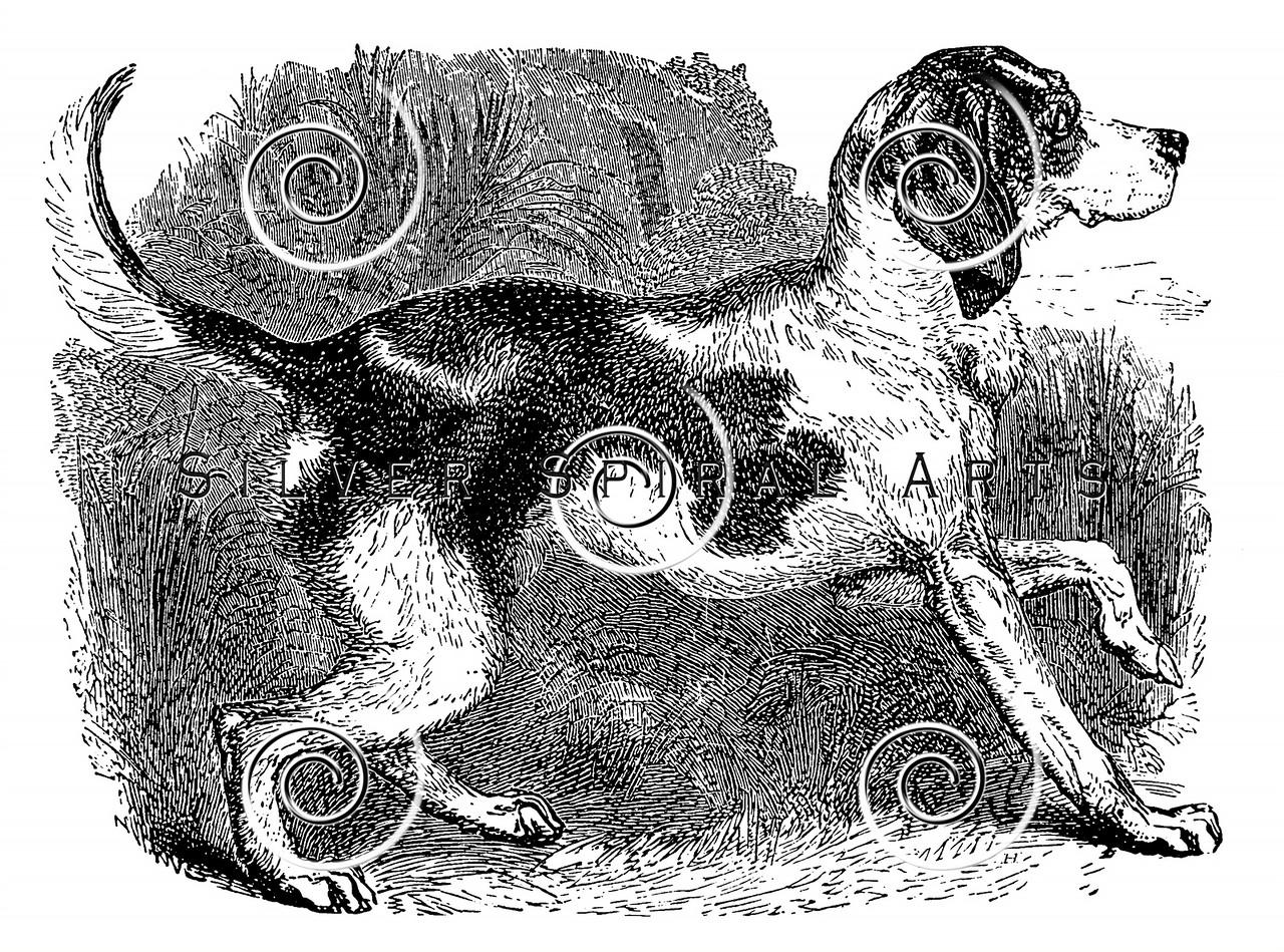 Vintage Fox Hound Dogs Illustration - 1800s Dog Images