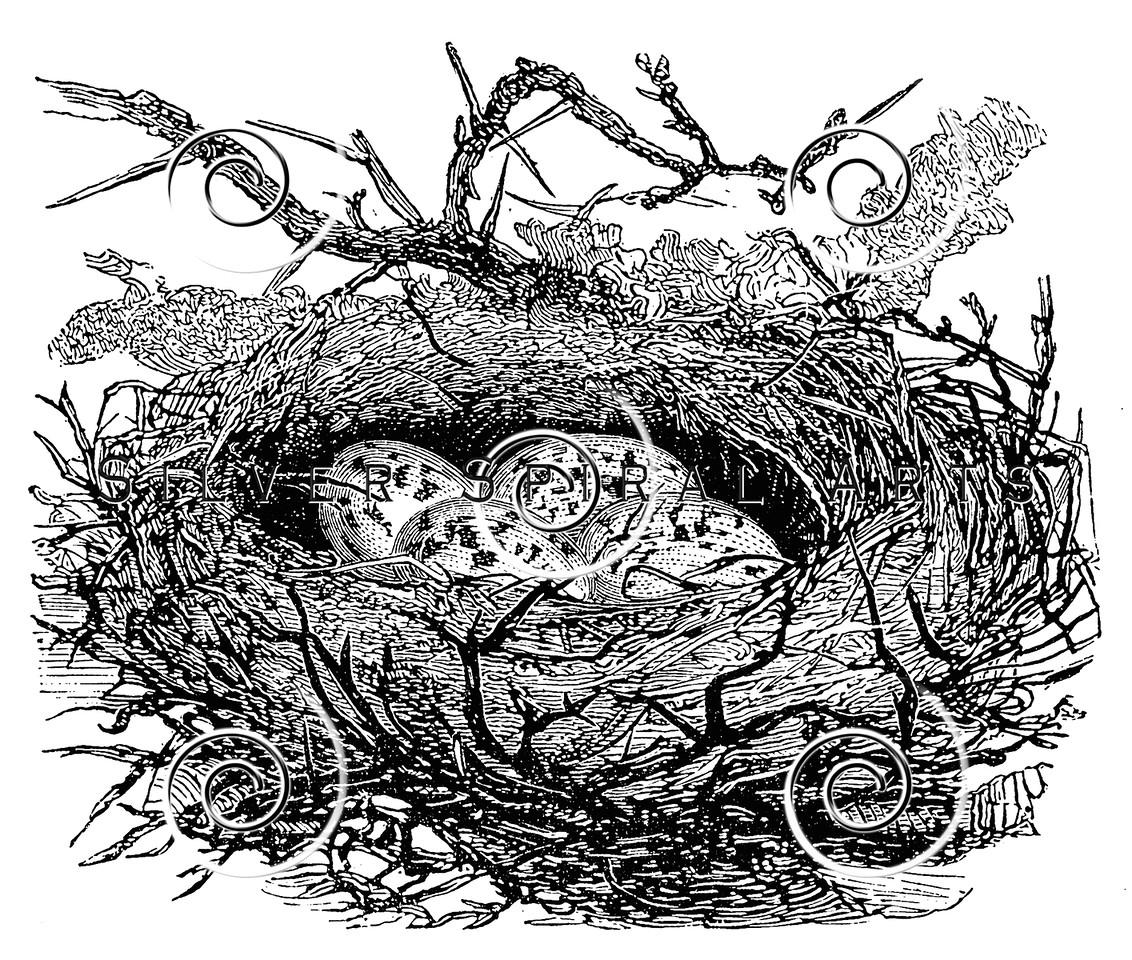 Vintage Birds Nests Illustration - 1800s Eggs Nest Images