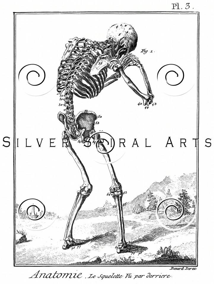 Vintage Skeleton Body Illustration - 1700s Skeletons Images.