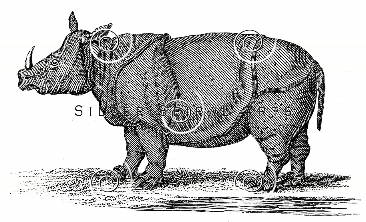 Vintage Rhinoceros Illustration - 1800s Rhino Images.