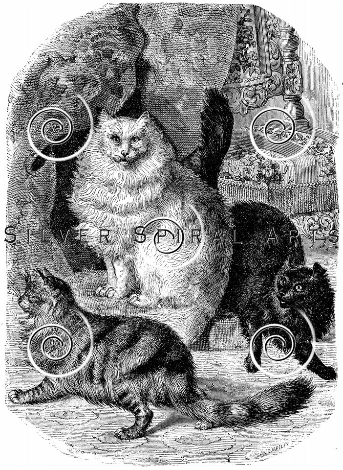 Vintage Persian Cats Illustration - 1800s Cat Images