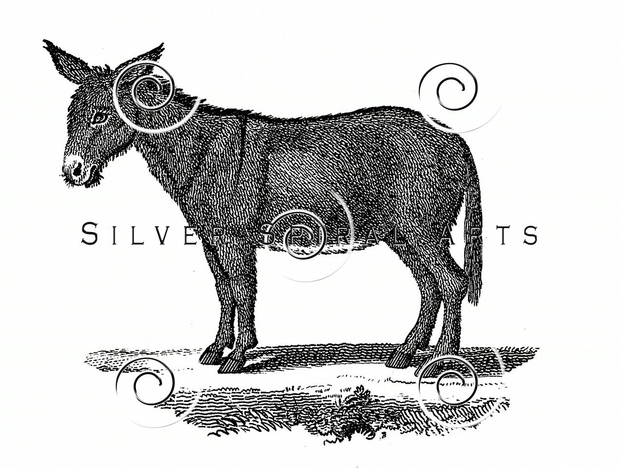 Vintage Donkey Illustration - 1800s Mule Images.