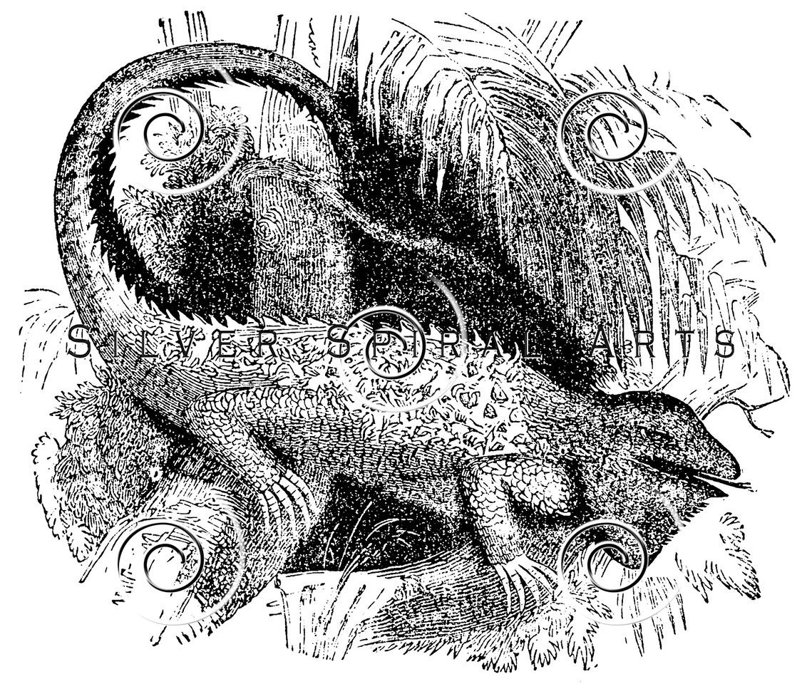 Vintage Iguana Reptile Illustration - 1800s Iguanas Reptiles Images