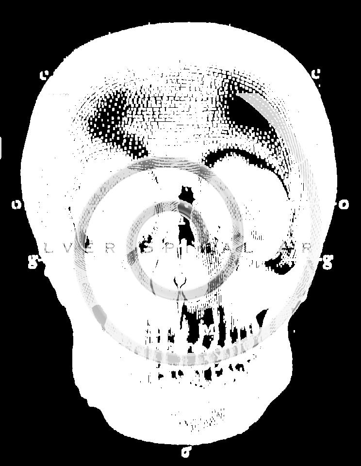 Vintage Skeleton Skull Illustration - 1800s Skeletons Bone Images.
