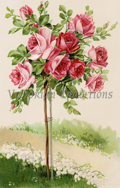 "Flowering rose bush - a 1909 vintage illustration. This image is available in 1-megapixel, 4-megapixel, and the ""Original"" download sizes. (To purchase prints or downloads, click on the ""Buy"" or shopping cart button above the image; then choose ""This Photo"", followed by clicking on the 'Prints', 'Merchandise', or 'Downloads' tab.)"
