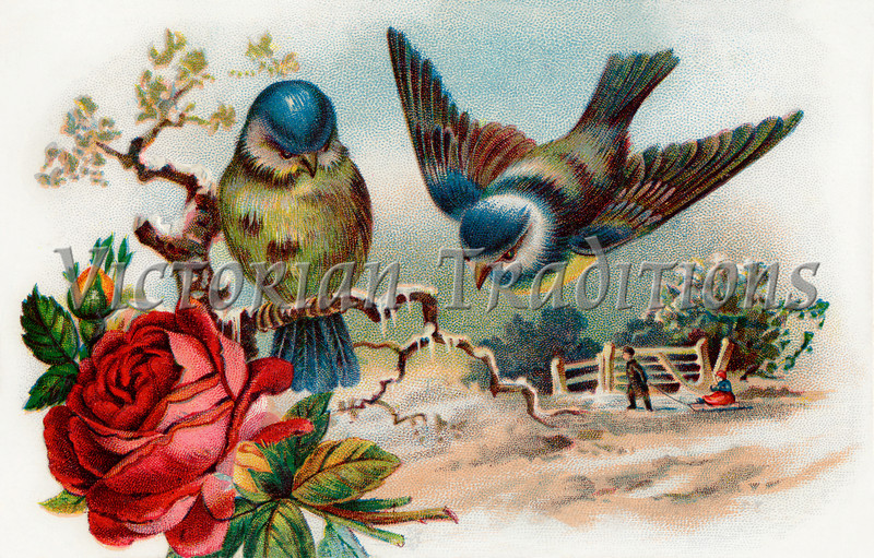 Song birds - winter scenic - circa 1910 vintage illustration