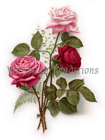 Vintage Floral Collection