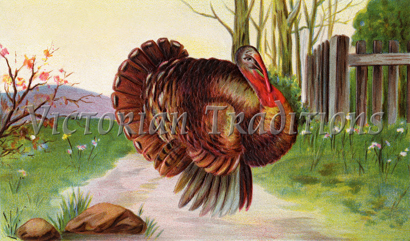 """Strutting Thanksgiving Turkey - a vintage 1910 illustration. Your purchased prints & downloads will NOT have the """"Victorian Traditions"""" watermark."""