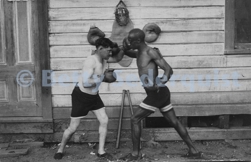 Two Coloma Boxers