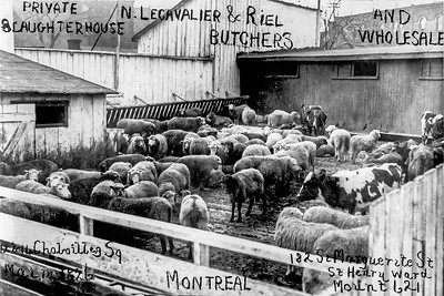 Photos of Slaughterhouse in Sainte-Cunégonde. Montreal Canada, Family members of my mothers first husband. These photos probably dates from the early 20s. Very dirty looking environment. These photos are said to have been used as business cards at the time