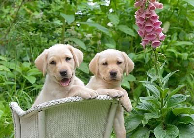 Vintage Pups