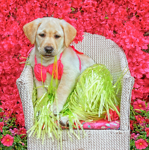 Lucy Loves Grass skirts