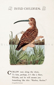 Vintage 1900s Color Illustration of Curlew Bird Children from BI