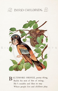 Vintage 1900s Color Illustration of Baltimore Oriole Bird Children from BIRD CHILDREN by Elizabeth Gorden.  The natural patina, age-toning, imperfections, and old paper antiquing of this vintage 20th century illustration are preserved in this image.