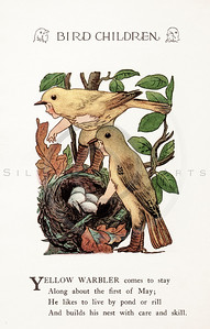 Vintage 1900s Color Illustration of Yellow Warbler Bird Children from BIRD CHILDREN by Elizabeth Gorden.  The natural patina, age-toning, imperfections, and old paper antiquing of this vintage 20th century illustration are preserved in this image.