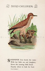 Vintage 1900s Color Illustration of Sandpiper Bird Children from BIRD CHILDREN by Elizabeth Gorden.  The natural patina, age-toning, imperfections, and old paper antiquing of this vintage 20th century illustration are preserved in this image.