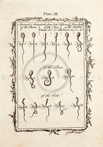 Vintage 1700s Sepia Illustration of Sperm - NATURAL HISTORY by Count de Buffon.