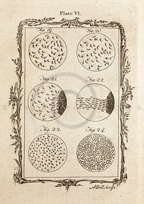 Vintage 1700s Sepia Science Illustration - NATURAL HISTORY by Count de Buffon.