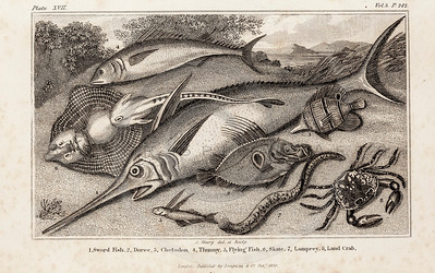Vintage 1800s Illustration of Fish - ANIMAL BIOGRAPHY by Rev. Bingley.