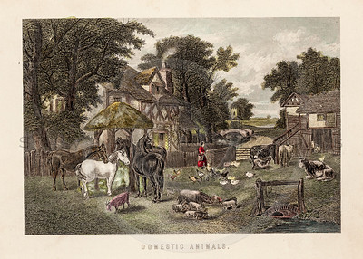 Vintage 1800s Color Illustration of a Farm Scene.
