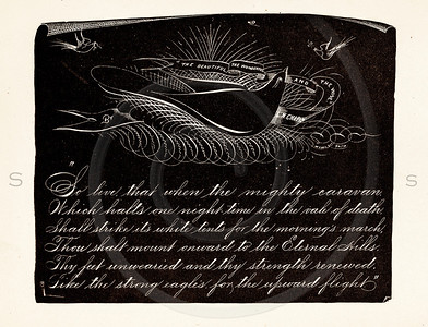 Vintage illustration of Black and White Bird Design with Text from 1887.  The natural age-toning, paper stains, and antique printing imperfections are preserved in this 1800s vintage stock image.