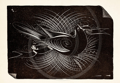Vintage illustration of Black and White Bird Design from 1887. The natural age-toning, paper stains, and antique printing imperfections are preserved in this 1800s vintage stock image.
