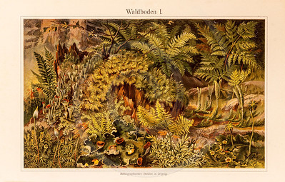 Vintage illustration of Forest Floor from Meyers Konversations Lexikon 1913 Encyclopedia.  Antique digital download of old print - forest; foliage; bushes; fern; tree; plants; plant; nature; flora; botanical; botany.  The natural age-toning, paper stains, and antique printing imperfections are preserved in this 1900s stock image.