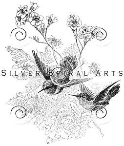 Vintage Hummingbird Birds Illustration - 1800s Bird Images.