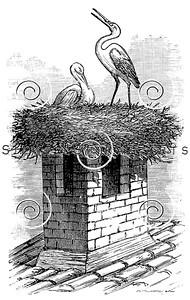 Vintage Stork Birds Nest Illustration - 1800s Storks Bird Images.